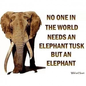 no-on-needs-a-tusk
