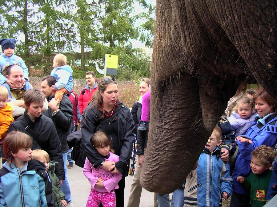 Elefanten Kontakt mit den Zoobesuchern