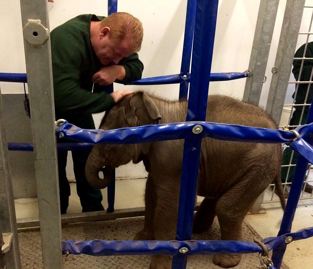Elefantenbaby Zinda im Zoo Dublin