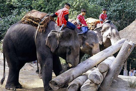 elefant-arbeit