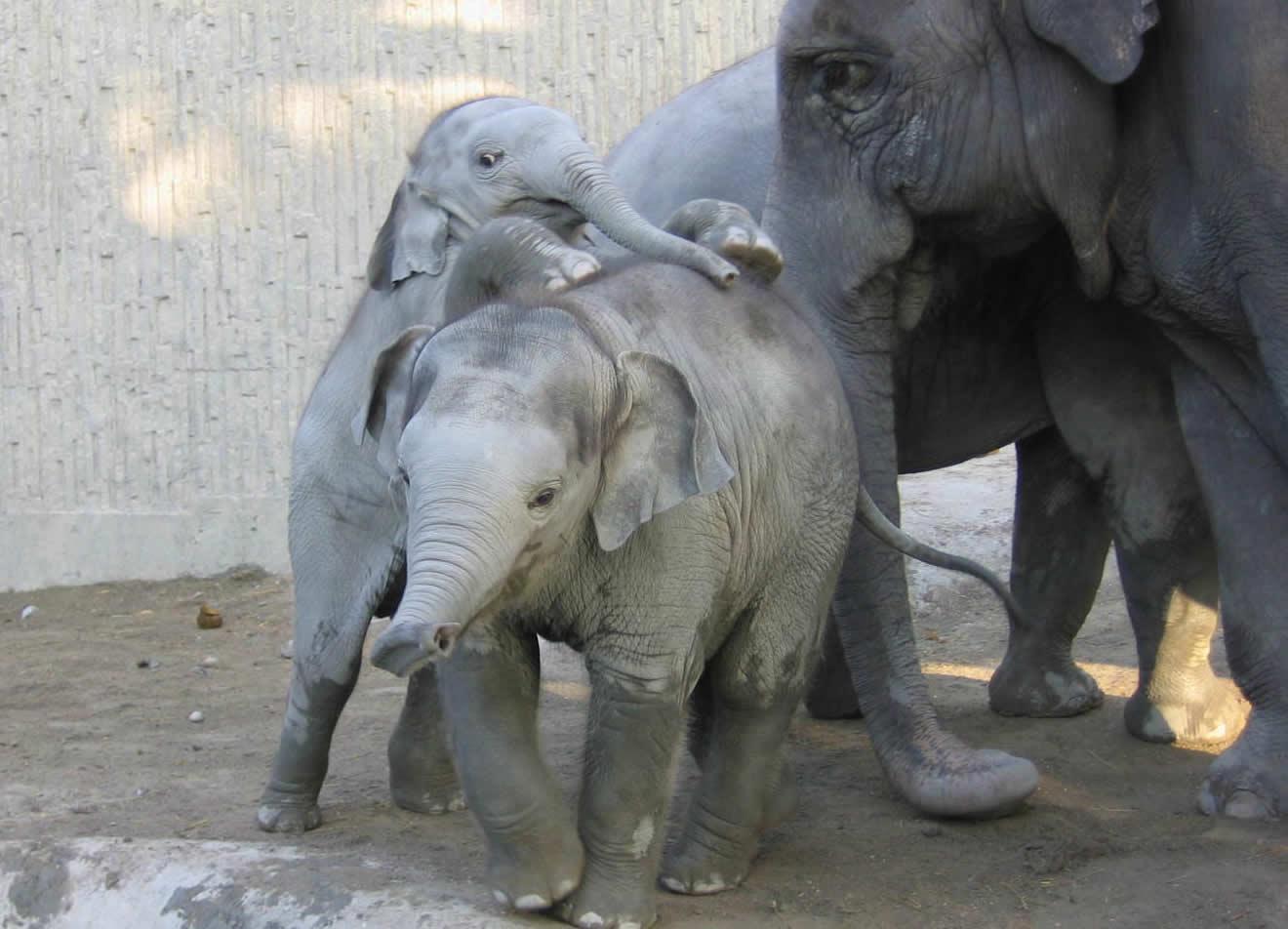 Der Rüssel der Elefanten – Upali.ch