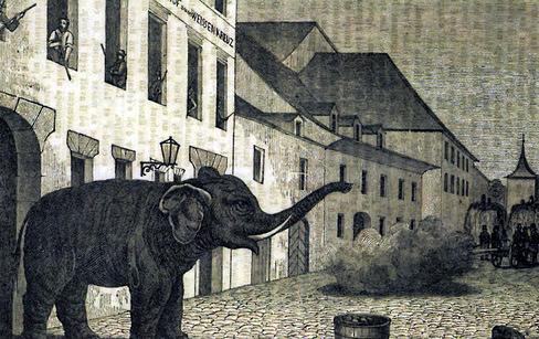 Der Elefant von Murten in der Rathausgasse