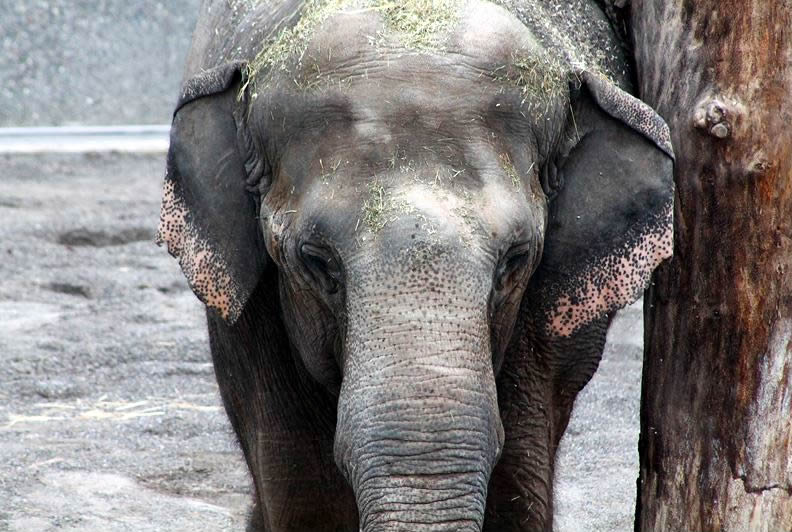 Ceylon, Himmapan Elefantenpark Rapperswil