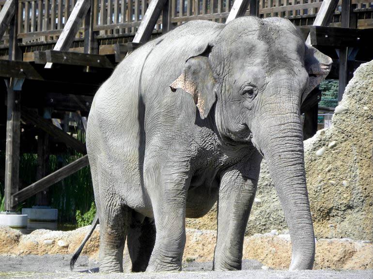Sabu, Himmapan Elefantenpark Rapperswil