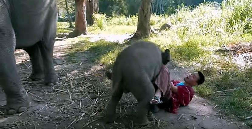 Fast Unfall mit Babyelefant