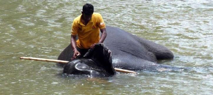Badender Elefant in SriLanka